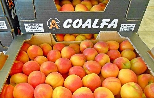fruta-de-verano-coalfa