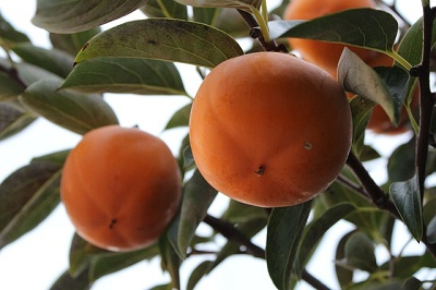 linea de fruta